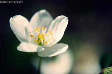 delight. by Cheyanne-Stinson