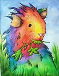 Guinea pig of Many Colours
