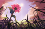 Bloom At Summer's End