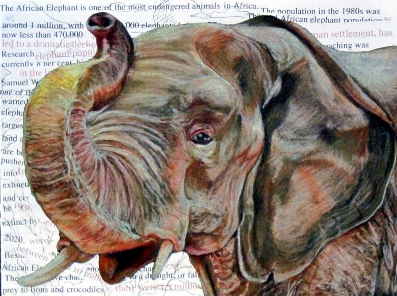 Elephant by Rio-del-Pantera