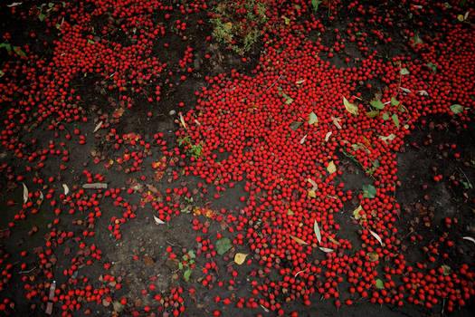 red berries of Earth