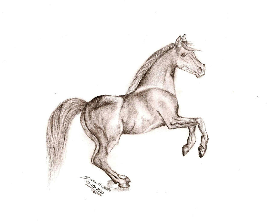 Horse pencil drawing by danasuckerfield