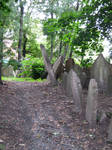 the old jewish cemetery 37