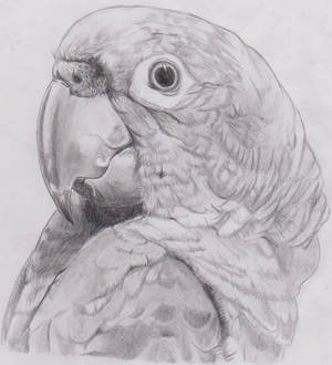Parrot~