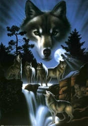 wolfs by luthien-moon5