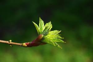 grow by karlomat