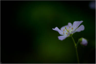 Lonely by karlomat