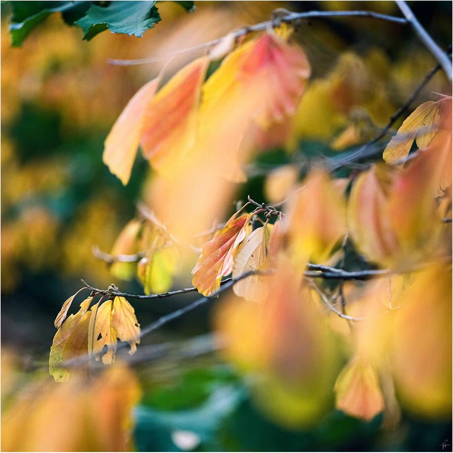 Autumn by karlomat