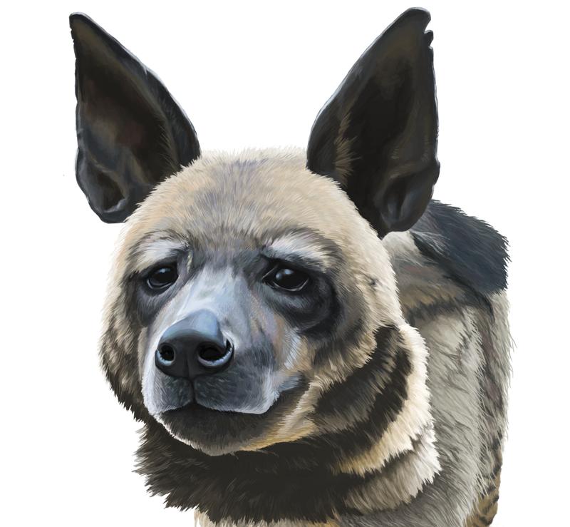Striped Hyena WIP 4 by Respeanut