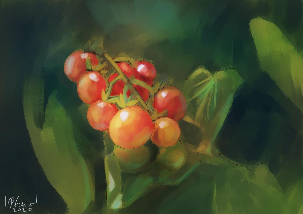 Tomatoes S