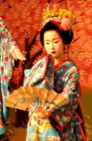 Sakura Bijin by Fuyou-hime