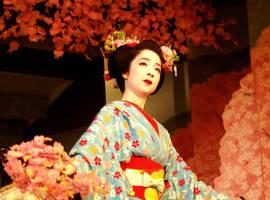 Sakura by Fuyou-hime