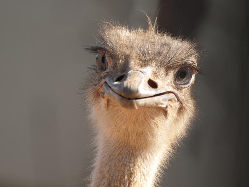 [Image: an_ostrich_smile_by_alont-d38rotg.jpg]