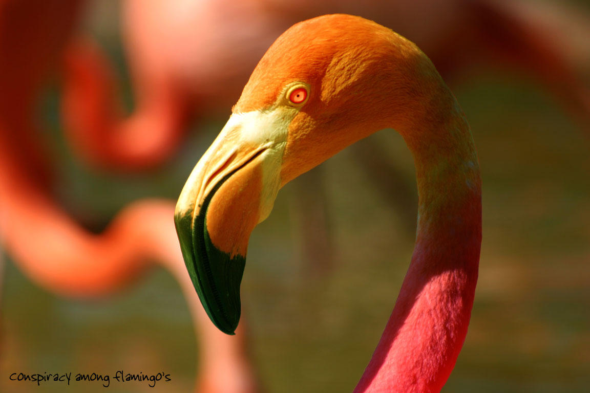 Conspiracy Among Flamingo's by Chumpit