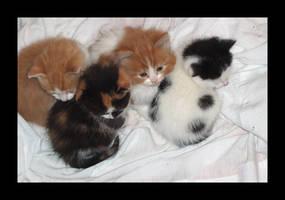 Kittens by evilspoon