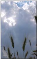 Craking Day in The Wheat Field by monokoma