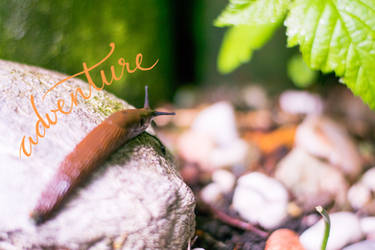 Slug Life: Rocko by dareme