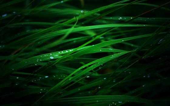 OSX Leopard Grass Modification