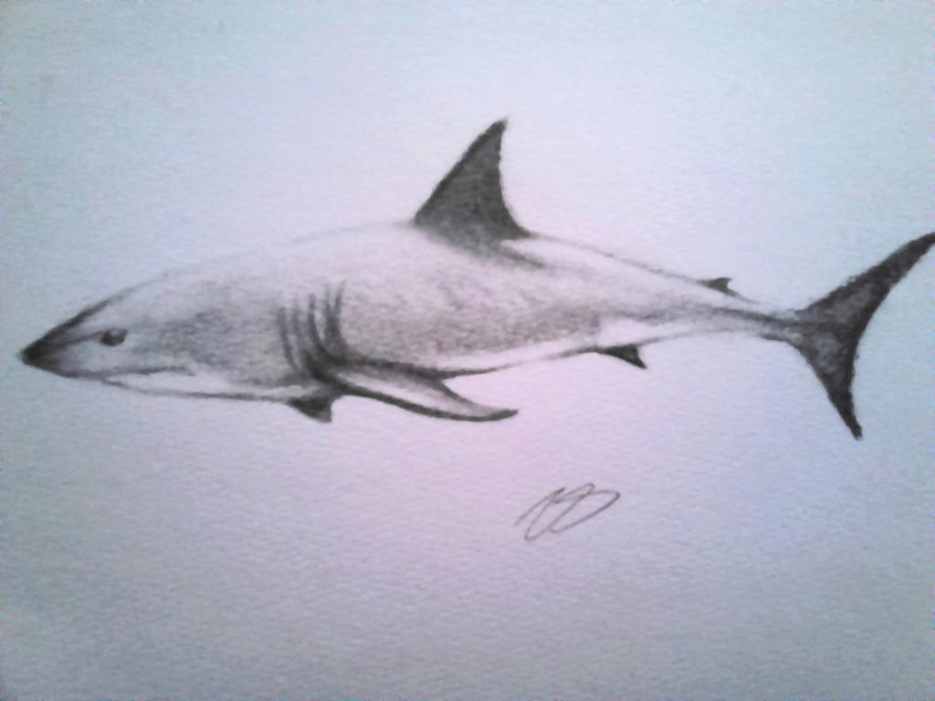 Charcoal Great White by Breyvan