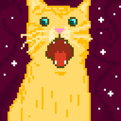 Amazed space cat