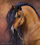 Flash in Western Bridle by cwrw