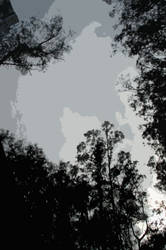 some trees and clouds