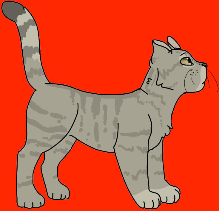 Cat anatomy practice by Practicalpolarbear on DeviantArt