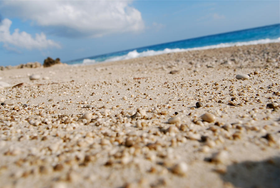 beach_macro_by_vini007-d2xwbgk.jpg