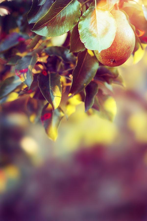 shining pear by waoff