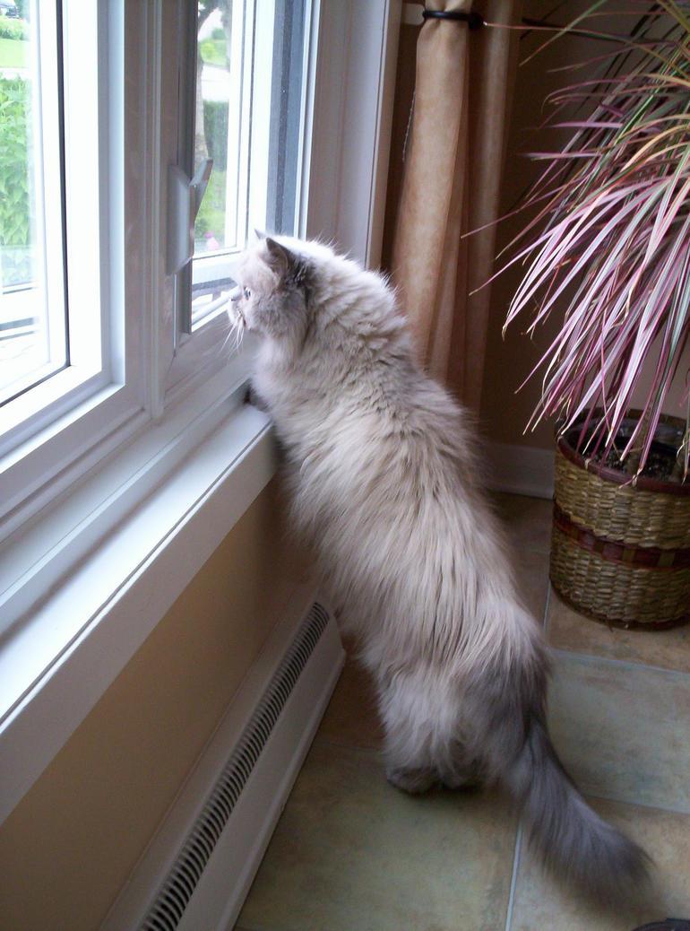 Cat Keeps Making Weird Noises