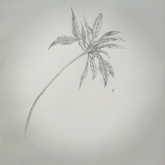 Wildflower by Audrey-Taft