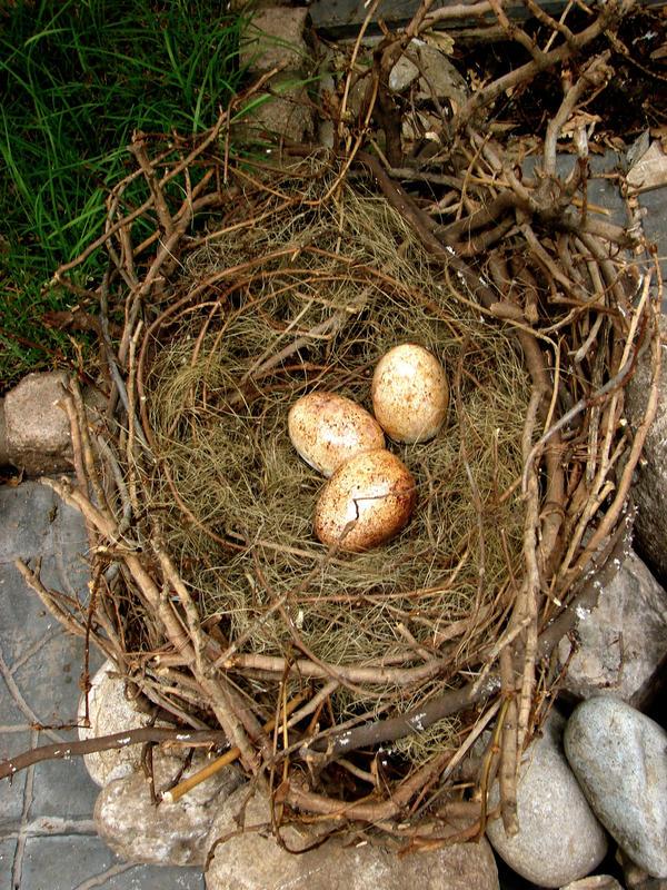 nido y huevos del aguila by helicoide