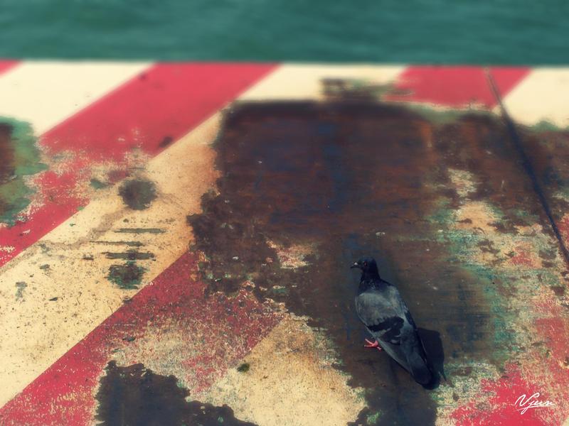 Lonely Bird by vjun