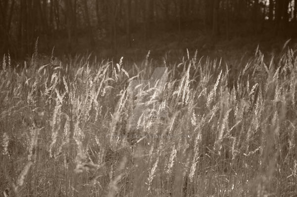 Grass by WiorkaEG