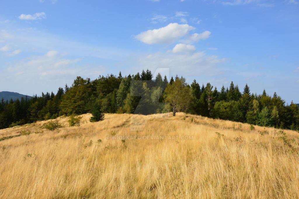 Mogielica - meadow by WiorkaEG