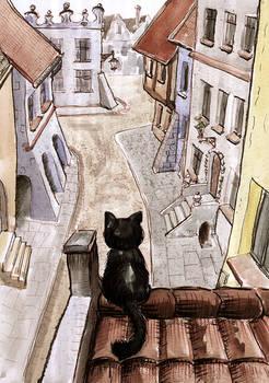 Ulica Kota - Cat's Street