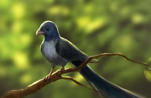 Long-tailed bird by Feedington