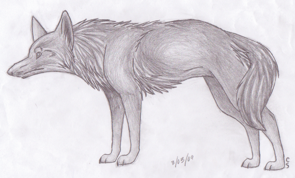 Realistic Coyote-Wolf by thefireflii