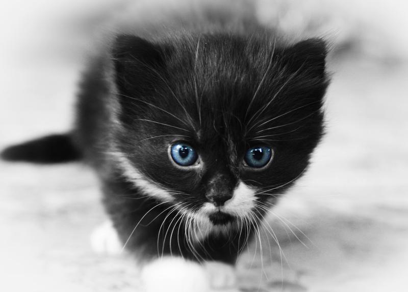 Kitty Hunt by SinInjection