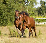 Frolicking Colts