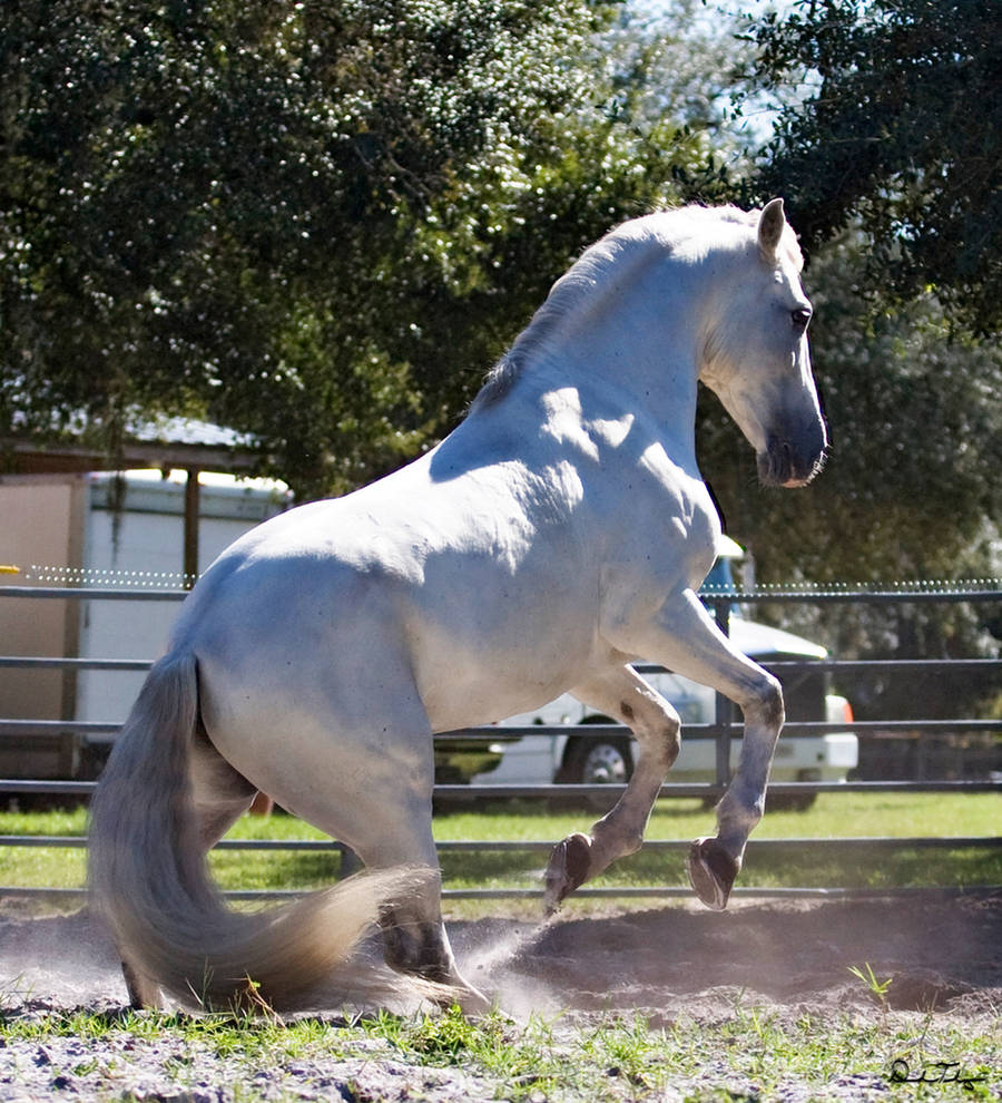 Silver Stallion 1 by Deirdre-T