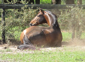 Enamorado In Repose by Deirdre-T