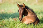 Week Old Andalusian Foal