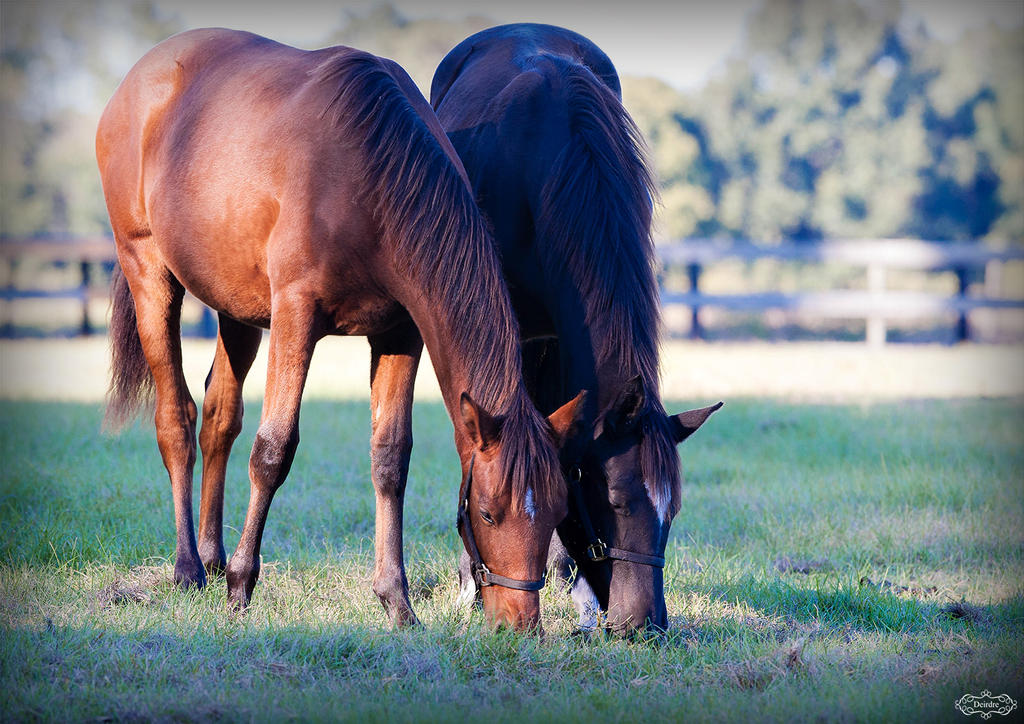 Sister Foals by Deirdre-T
