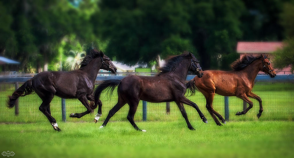 Three Fillies by Deirdre-T