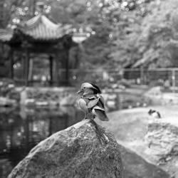 Mr. Mandarine by BardoFotografia