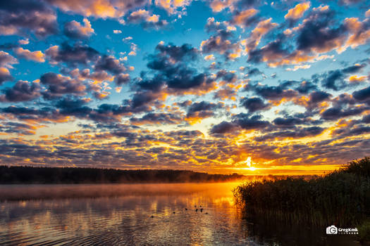 Sunrise, fog and ducks