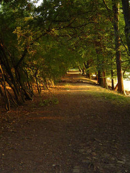 Path in evening sun