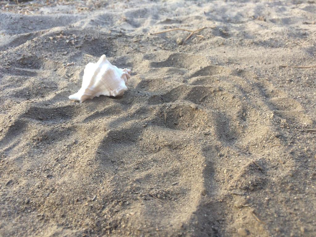 Seashells by Dylan-saeko