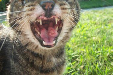 Meow by LA34